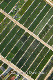Abstract aerial photograph of green gardens and feilds in Virginia.