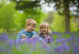 Children playing among Bluebells Norfolk May