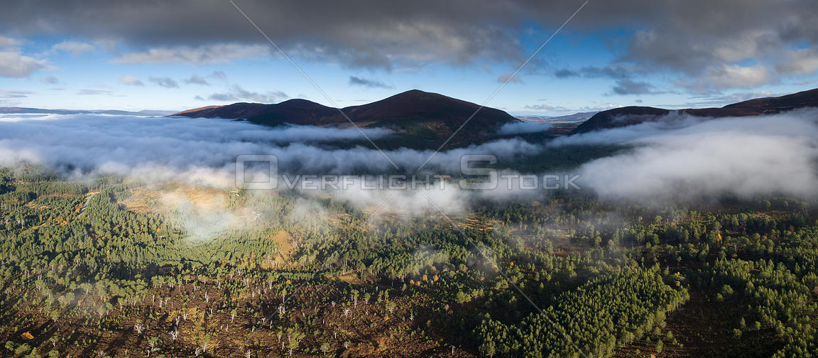 Rothiemurchus Forest in morning mist, Cairngorms National Park, Scotland, UK, October 2016.