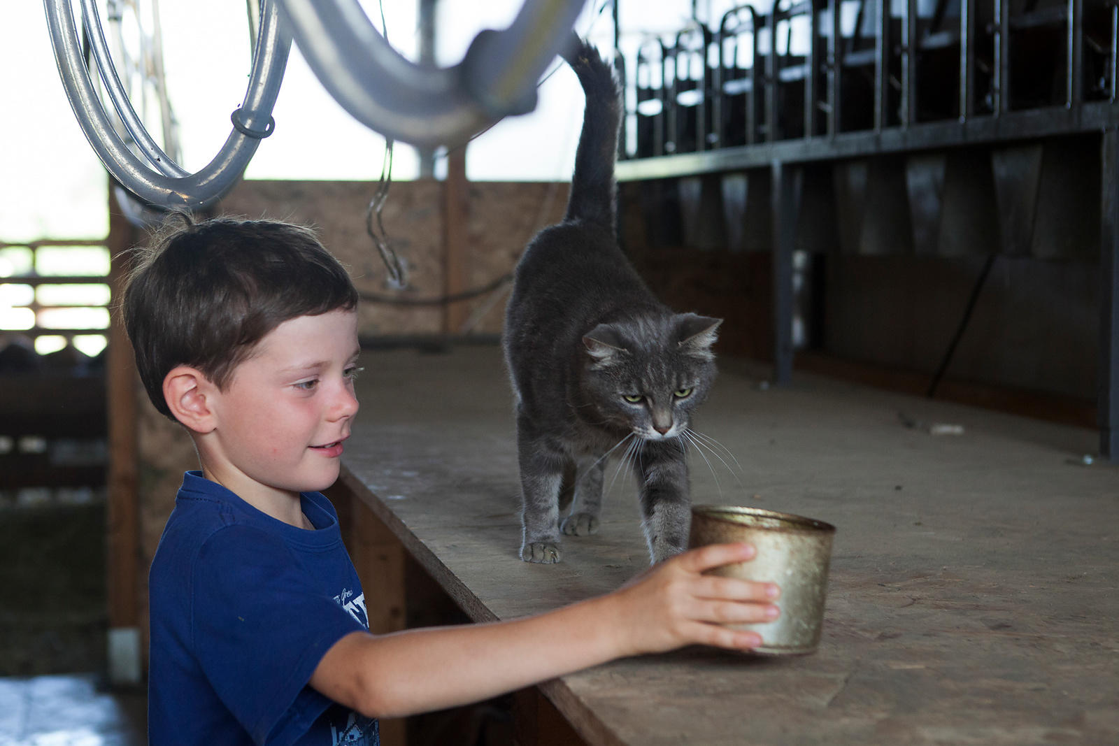 Enfant donnant du lait au chat de la ferme, France / Child giving milk to the cat of the farm, France