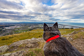 working dog looks out to the city below