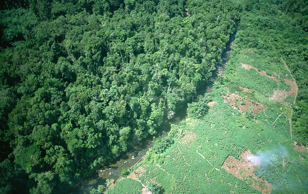 Aerial view of deforestation of tropical rainforest  for agriculture, Papua New Guinea