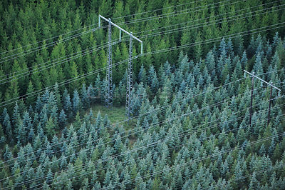 Aerial view of electricity pylons with wires crossing over a Norway spruce (Picea abies) plantation, Uppland, Sweden, Septemb...