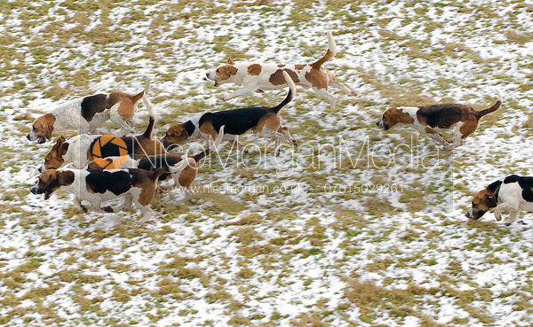 The Westerby Bassets at Stone Lodge Farm, Marefield