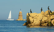 Cormorants in  Brehat island ,