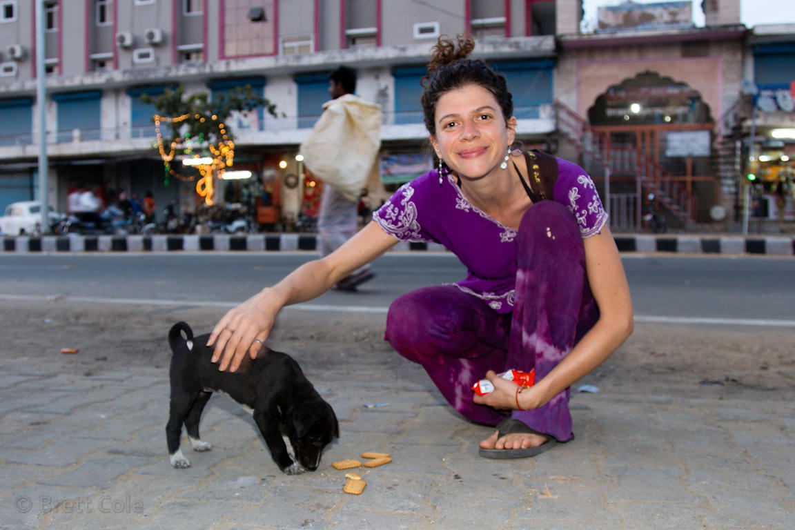 A visitor from the UK helps a street dog puppy, Pushkar, Rajasthan, India