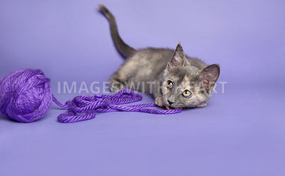 Kitten playing with yarn on a purple background