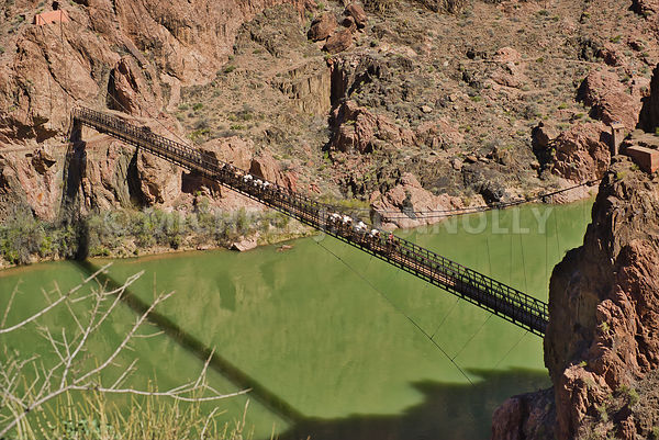 "Pack Train On The Black  (""Mule"") Bridge Leaving Phantom Ranch-Grand Canyon"