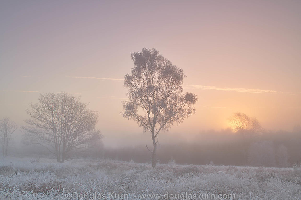 Limited edition Giclée fine art print of a leafless tree in the fog on Chobham Common