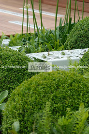 Ball shaped, Buxus, Contemporary garden, Sphere shaped, Topiary, Common Box, Digital