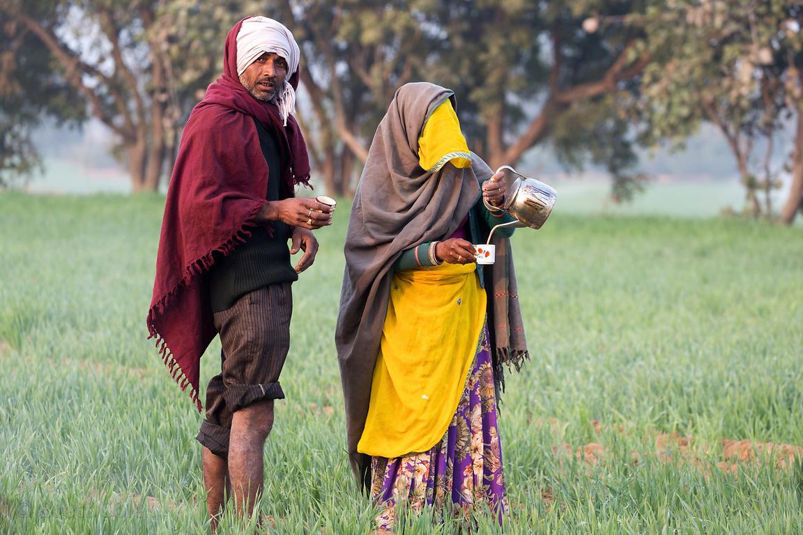 A woman serves chai tea to rice farmers, Surajkund village, Rajasthan, India
