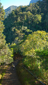 Hikers walk along the Timpohon access track to the Mount Kinabalu NP, Sabah, Borneo, Malaysia  2007