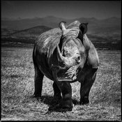 4281-Rhino_right_in_front_of_you_Kenya_2013_Laurent_Baheux