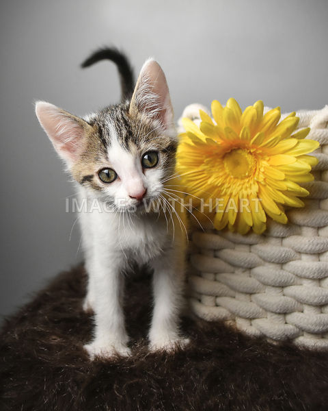 Tiny Kitten Beside Woven Basket