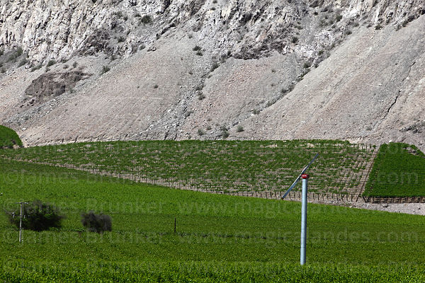 Vineyards and wind pump (part of the underground irrigation system), Copiapó Valley, Region III, Chile