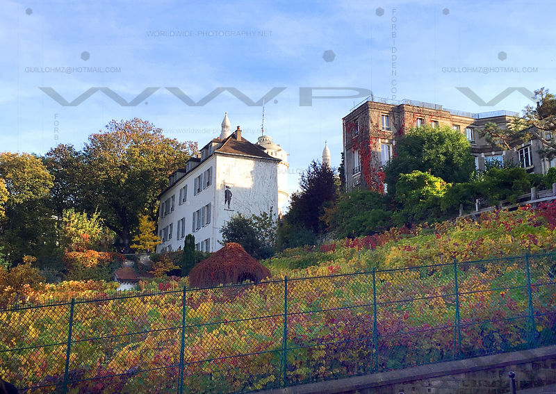 Vine-field-Montmartre-Paris-001