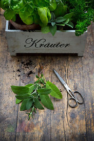 Assortment of herbs in crate