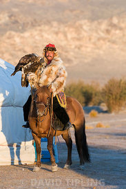 Dalai Han an Kazakh eagle hunter with his Golden Eagle Uglii in Altai Mountains western Mongolia