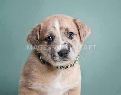Adorable mixed breed puppy head shot.