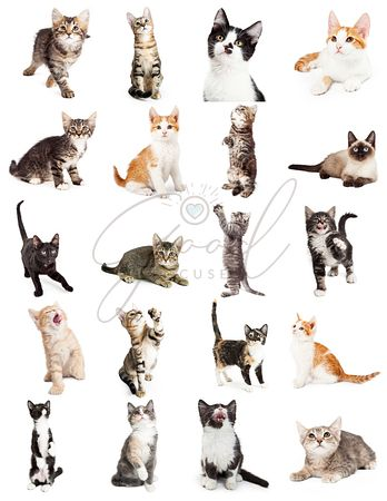 Large Set of Cute Playful Kittens