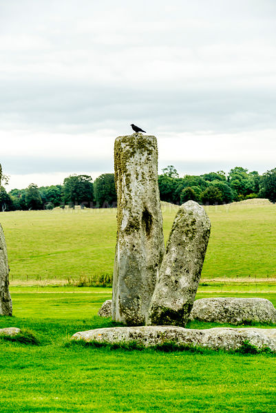 Crow on Stonehenge Station Stone- Wiltshire, England