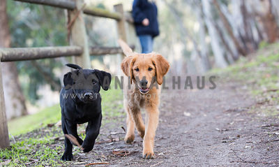 two puppies running down the trail with eye contact