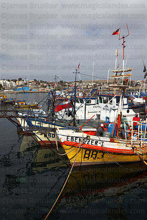 Fishing boats in port , Caldera , Region III , Chile