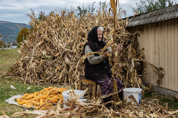 Portrait of Ileana Shucking Corn