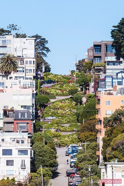 Lombard street, Russian hill, San Francisco, USA