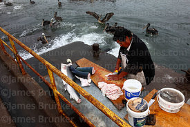 Fisherman filleting a shark in fishing docks, Arica, Region XV, Chile