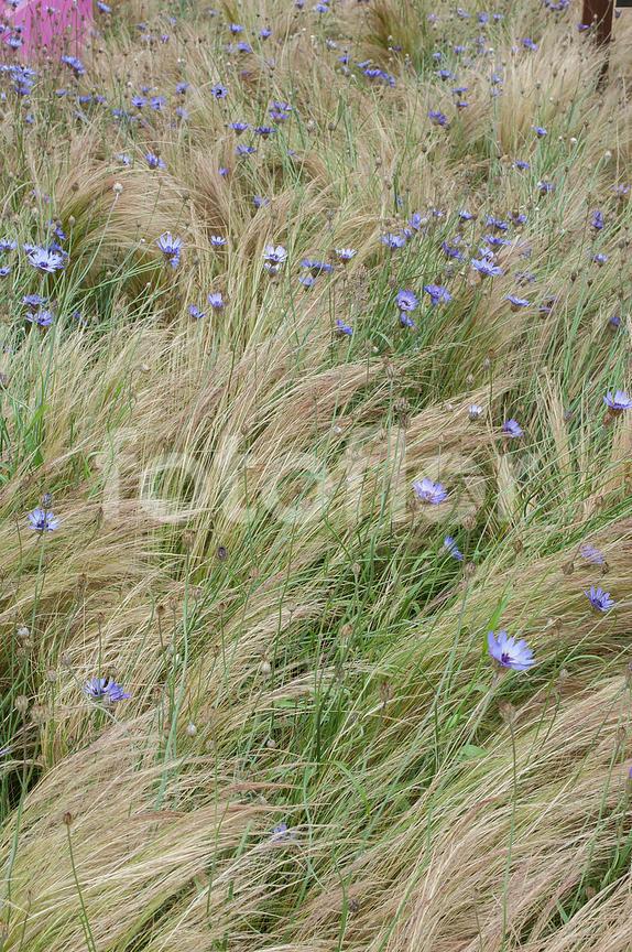 Photo de Prairie fleurie, friche fleurie, - fotoflor - grand ...