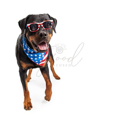 Dog Wearing American Flag Accessories