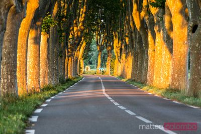 Typical tree lined road in the countryside at sunset, France