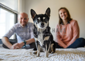chihuahua on bed with family