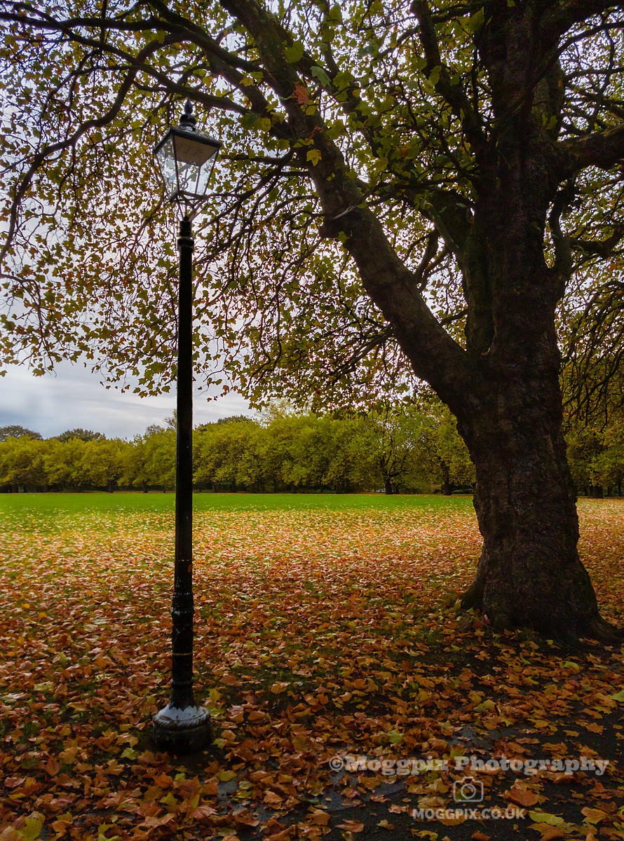 A Lamp and Tree in Autumn