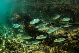 Snorkelers Can View Coral Reef Fish in Dry Torgugas National Park