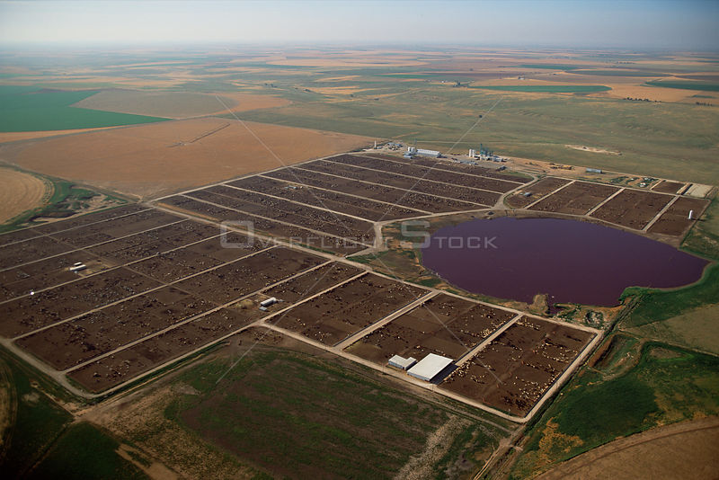 Aerial of intensive livestock rearing with playa lake polluted by manure, Texas Panhandle, USA.