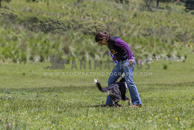 female dog trainer with Border Collie passing between her legs