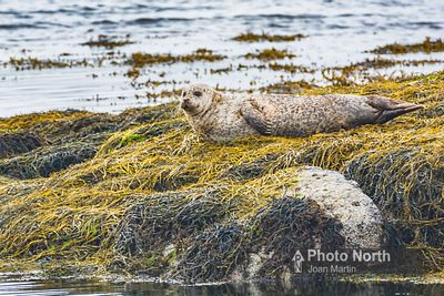SEAL 02A - Common seal