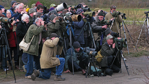 White-crowned Sparrow twitch at Cley North Norfolk January 2008