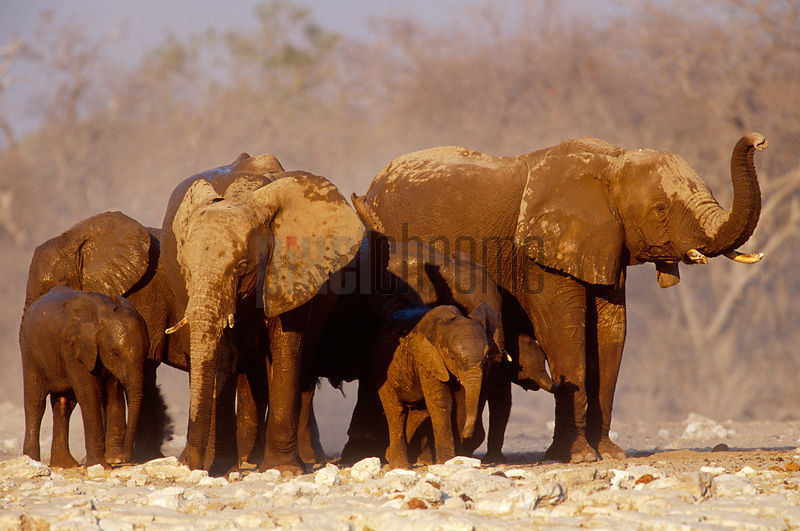 Elephants at Klein Namutoni Waterhole
