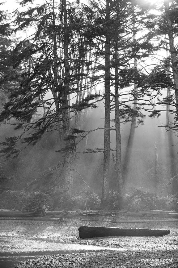 COASTAL FOREST OLYMPIC NATIONAL PARK WASHINGTON BLACK AND WHITE VERTICAL