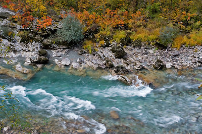 River Tara with autumnal vegetation, Durmitor NP, Montenegro, October 2008