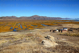 Totora reeds (Schoenoplectus californicus ssp. tatora) with sections that have been cut and harvested, Inner Lake, Lake Titicaca, Bolivia