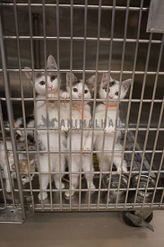 three kittens looking out from inside cage