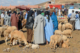 GUELMIM, MOROCCO – OCTOBER 31, 2015: Sheep for sale at the weekly market in the south Moroccan town of Guelmim.