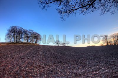 Copse & Ploughed Fields Off Flag Lane North