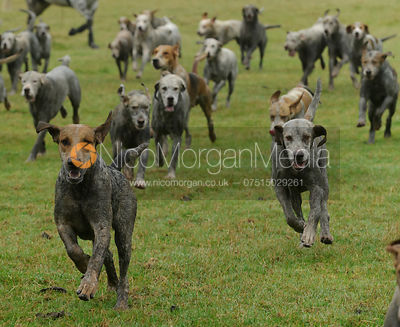 The Cottesmore Hunt at The Kennels 14/9