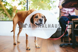 dog wearing cone of shame stands in coffee shop near man