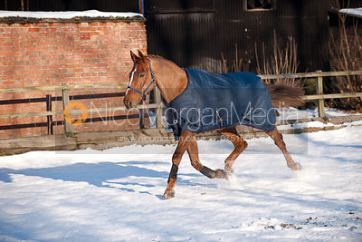 Equine stock images of horses in rugs in the snow